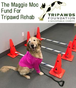 Maggie Moo Fund for Tripawd Rehab