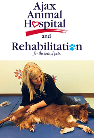 Ajax Animal Hospital _ Rehabilitation logo and photo