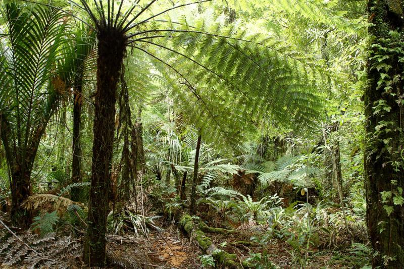fern_tropical_jungle.jpg