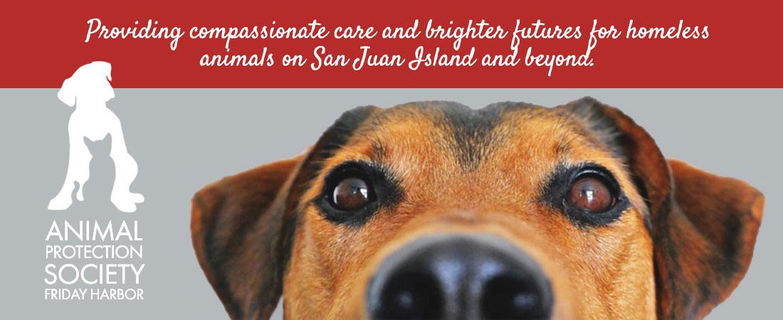 Animal Protection Society Friday Harbor