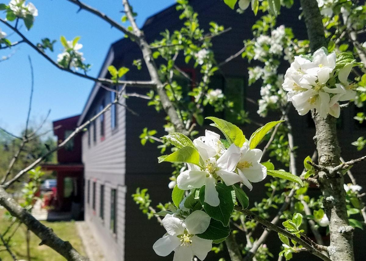 Apple Blossoms Resized Ext 050621.jpg