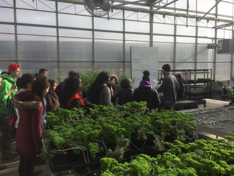 Students taking a tour of a green house and see vegetables growing at the Durham College Whitby Campus