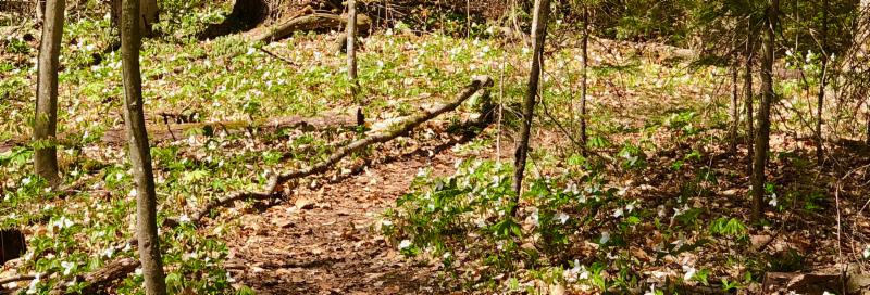 Path in the forest with broken tree