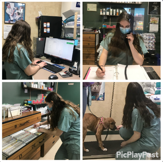 Female student working in a vet office as part of Cooperative Education.