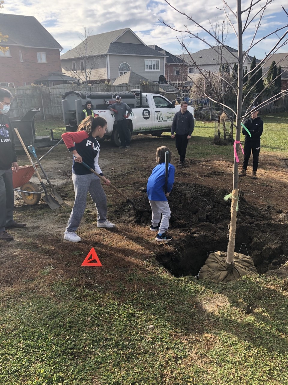 Students helping to plant trees in the school yard