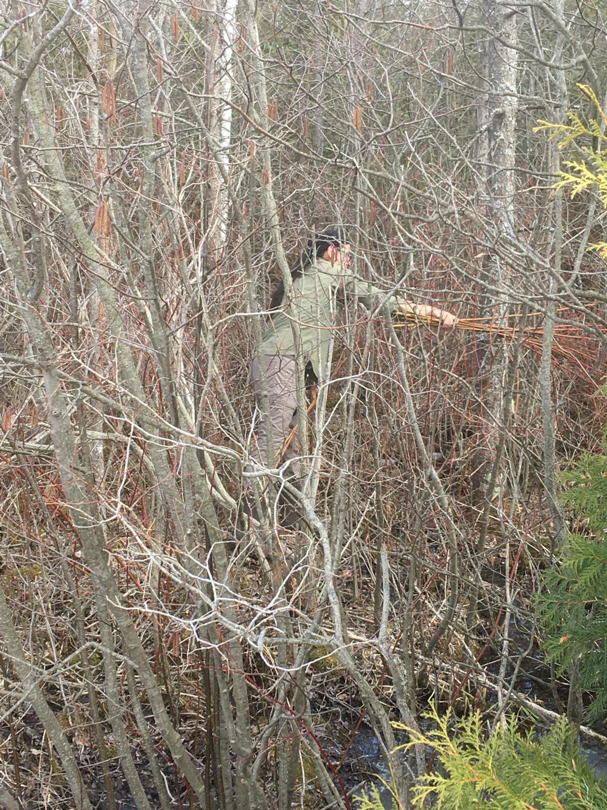 Beedahbin harvesting dogwood