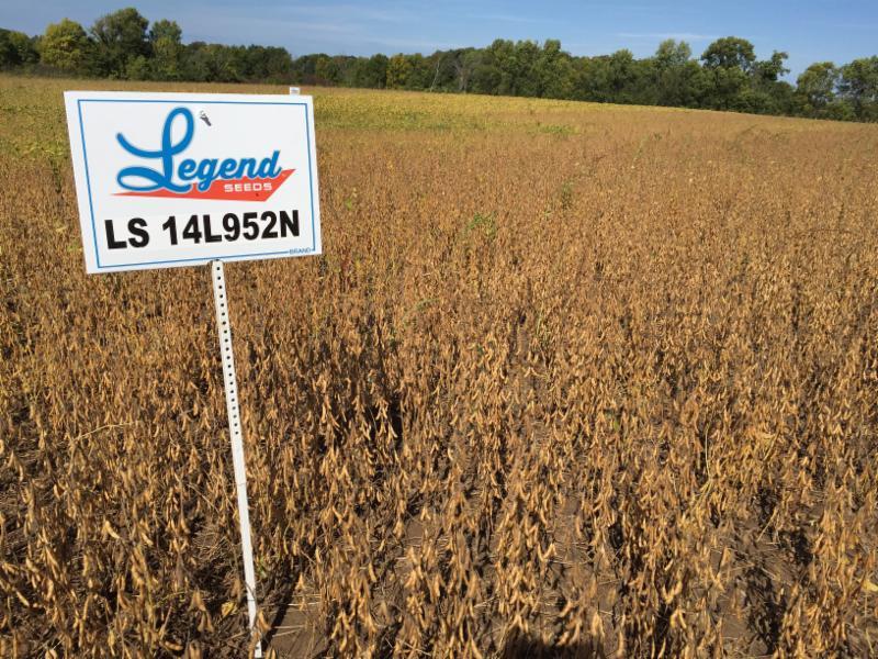 soybean plot ready to harvest