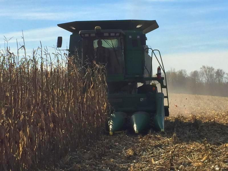 Bostrom corn harvest