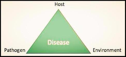 disease diagram
