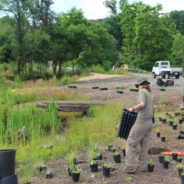 Volunteers lay out pots of things to plant