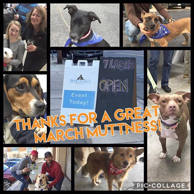 Cheers to everyone for making #marchmuttness a huge success! We loved seeing our foster and alumni dogs enjoying each others company as well as the support of their families! #petconnectrescue #adoptdontshop #rescuedogsofinstagram #instadog  @7locksbrewin