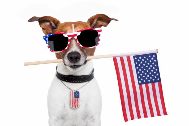 USA_dog.jpg