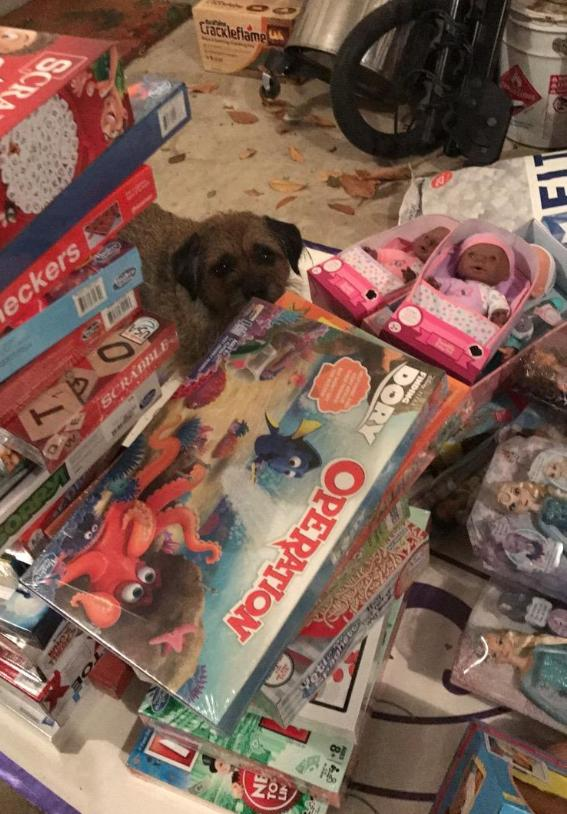 investors toys (and a dog)
