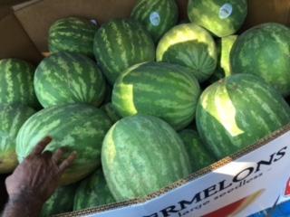 Farmers' market watermelons