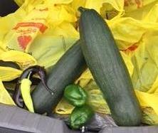 Walton's giant zucchini