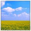 fields-sky-sm.jpg