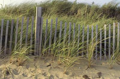 beach-fence-grass.jpg