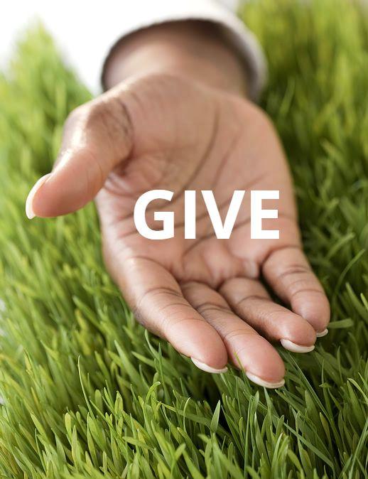 donation_palm.jpg