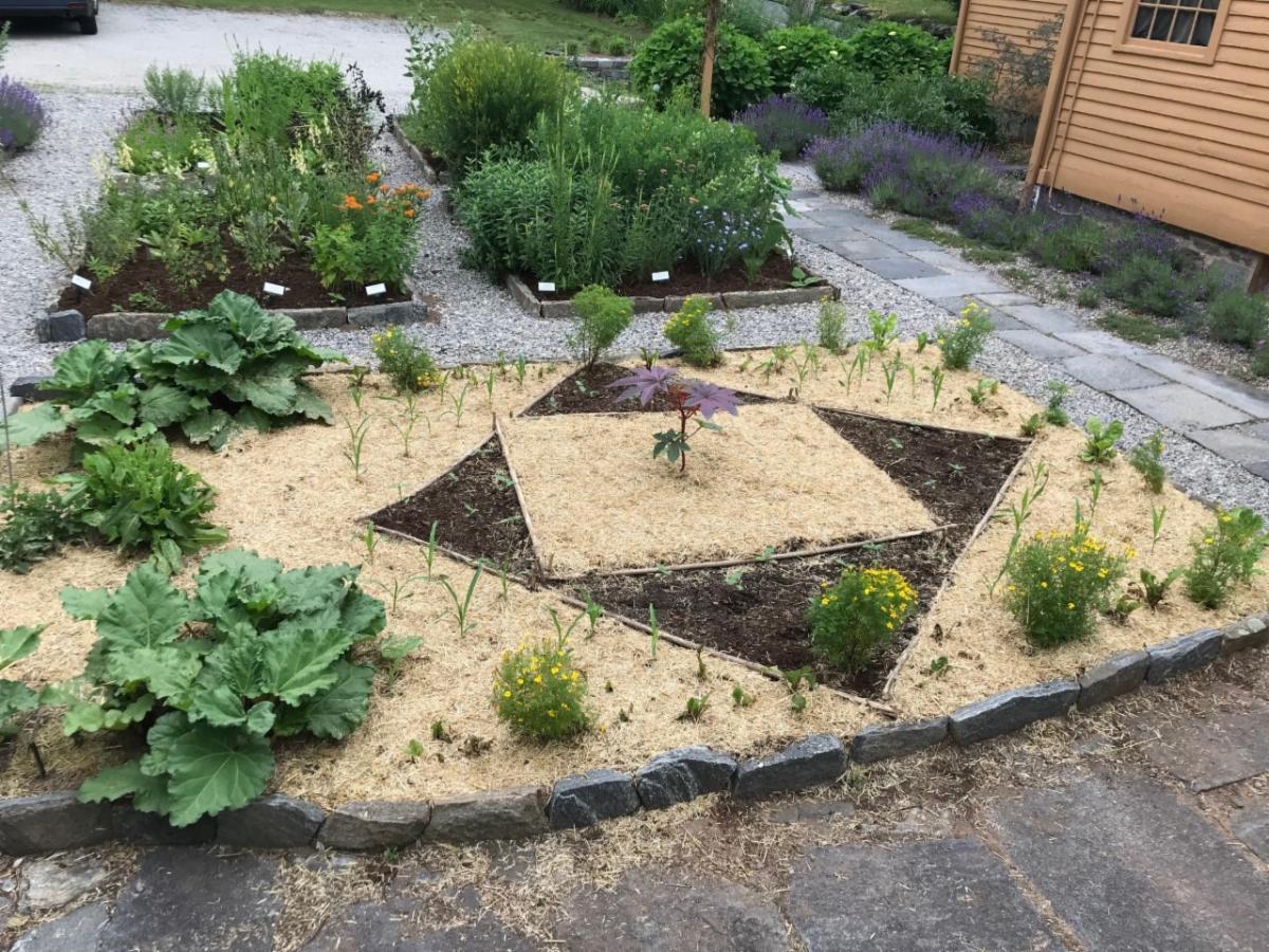 veg garden thumbnail_IMG_2186.jpg
