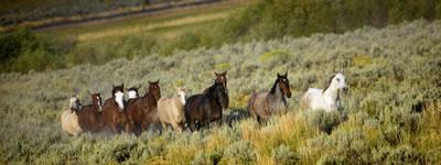 wild-horses-banner.jpg
