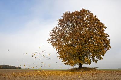 windy-tree-leaves.jpg
