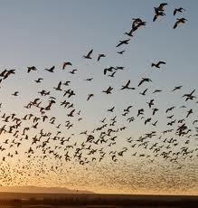Spring bird Migration