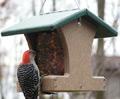 Birds Choice Recycled Feeders
