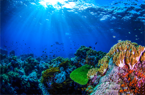 Underwater coral reef fish shoal world landscape