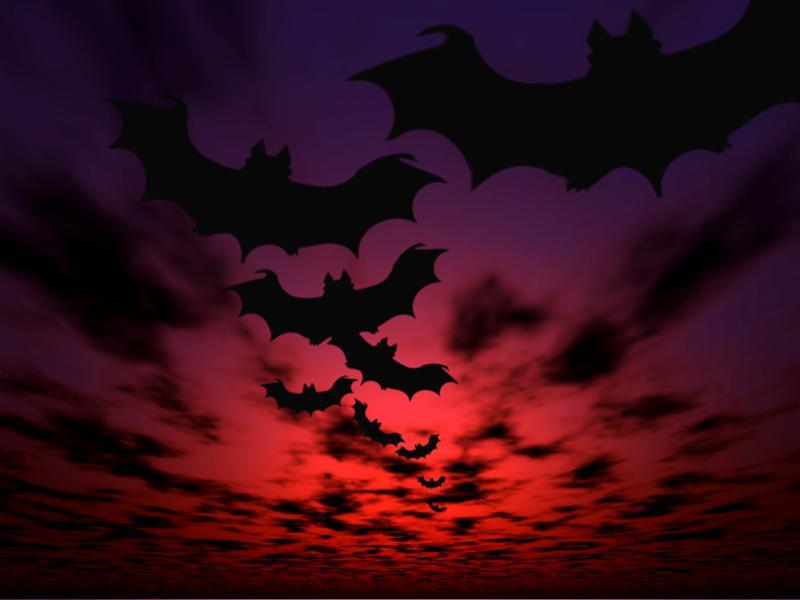 bats_halloween.jpg