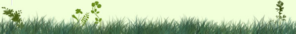 grass-clovers-header.jpg