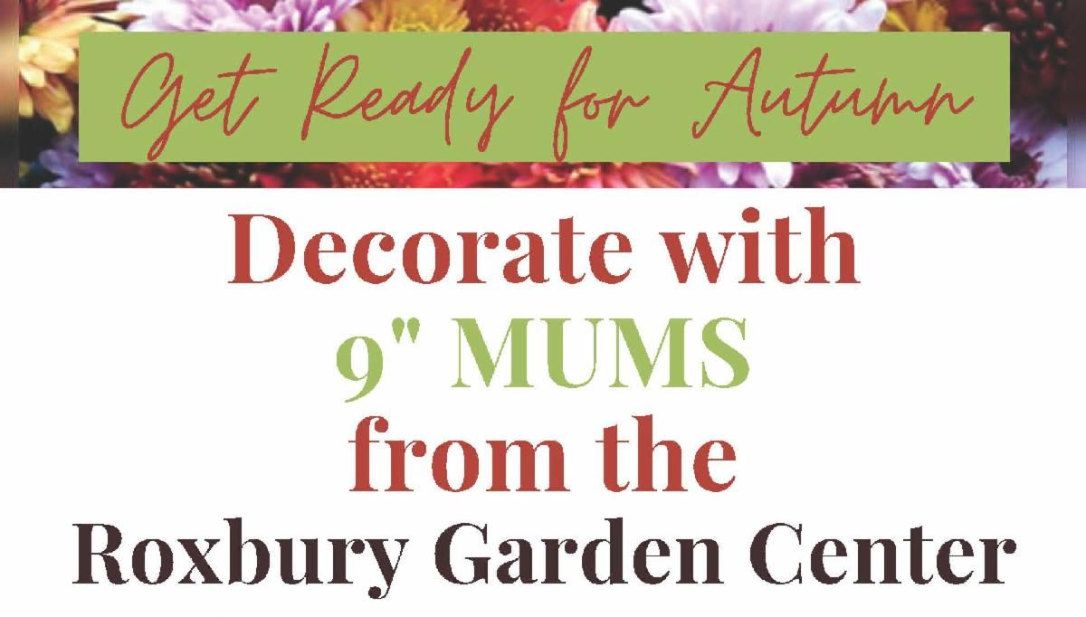 """Autumn colors that a says get ready for autumn decorate with 9"""" mums from the Roxbury Garden Center."""