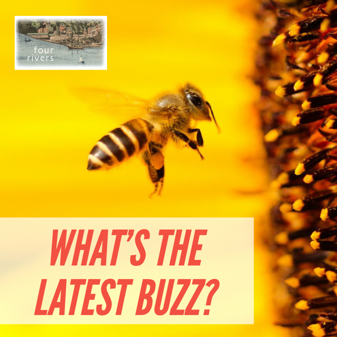 What's the latest buzz?
