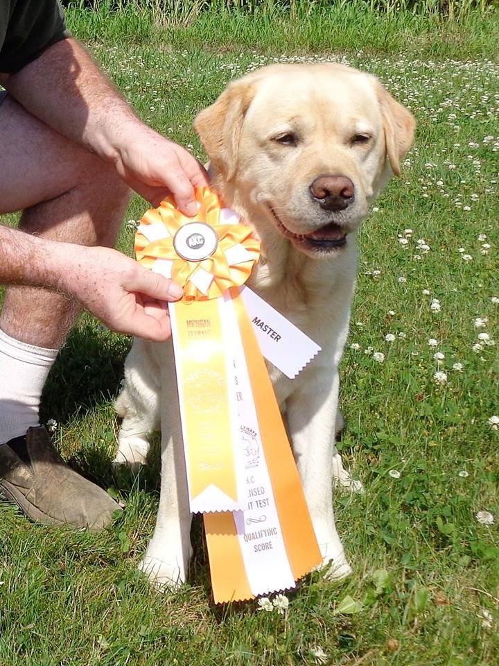 Retriever Results - What's News - Hunting Tests - August 11
