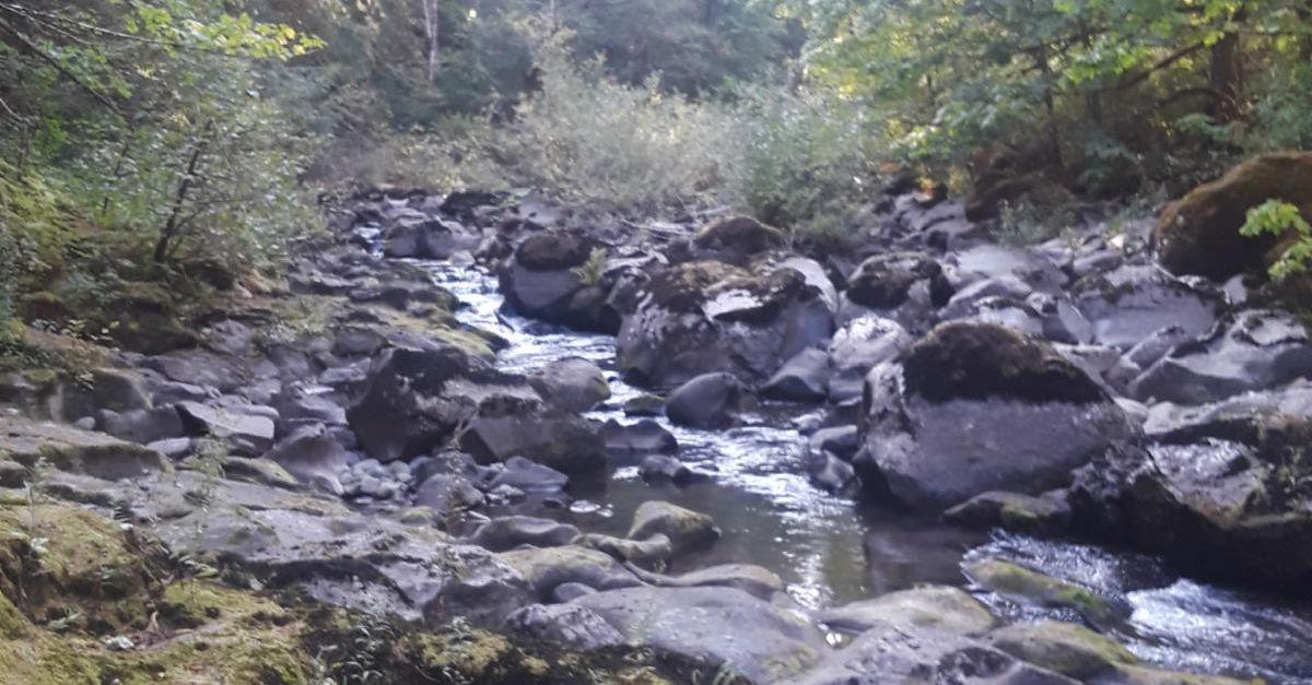 Creek near Carson WA