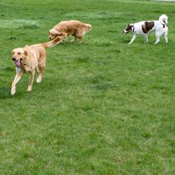 Harris Family Dog Park