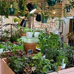 Equinox botanical boutique