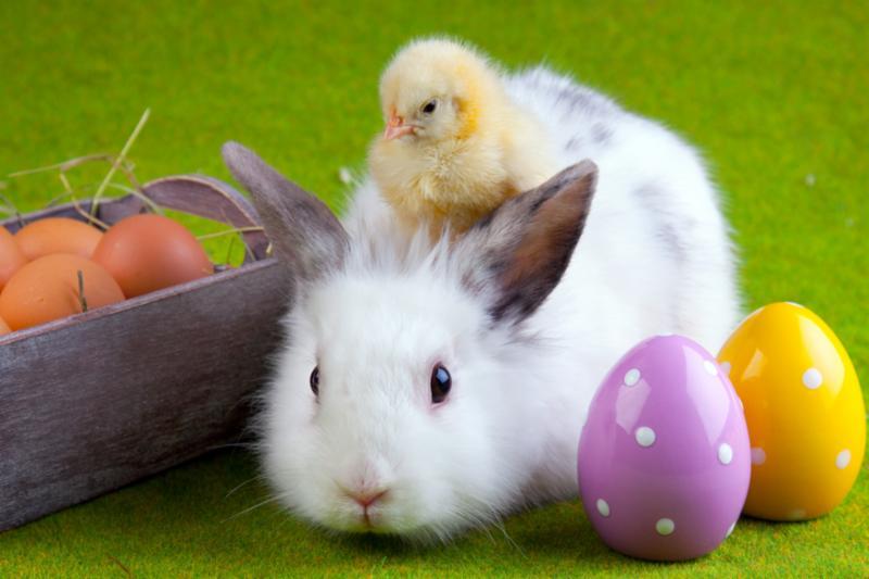 bunny_chick_easter.jpg