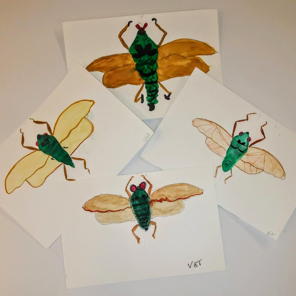 image of four watercolor paintings of cicadas.