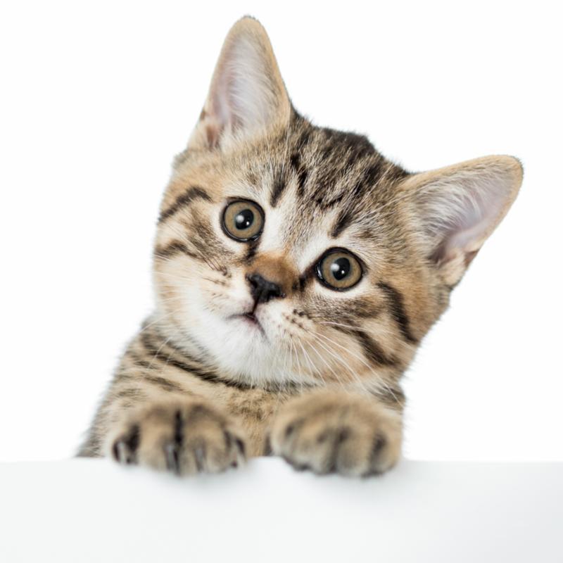 curious_kitten_paws.jpg