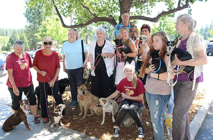 Dogs _ Pals at July Adoptathon