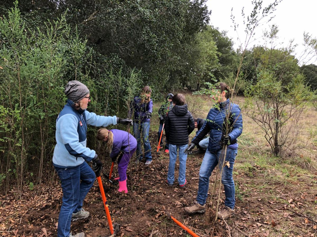 an adult and several children in warm coats use tools to pull up plants