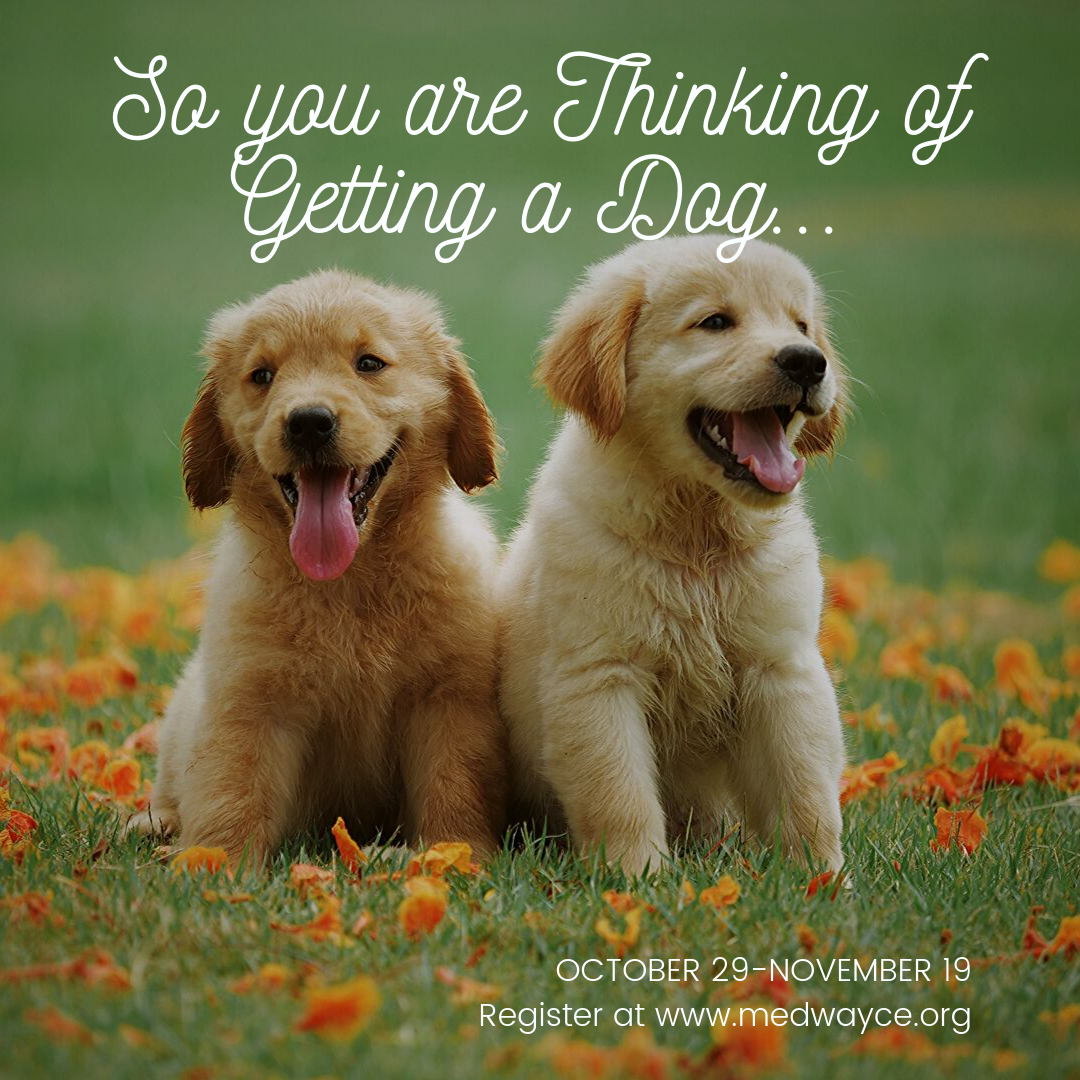 Community Education - Thinking about getting a Dog?