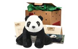 adopt a giant panda package