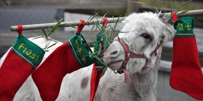 a donkey holds stockings on his head
