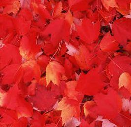 red-foliage-shoe.jpg