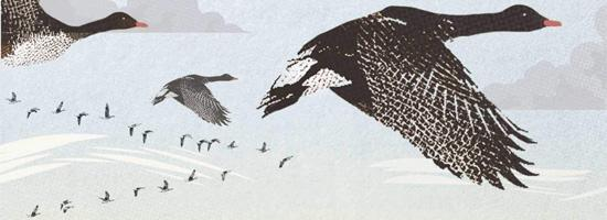 Crop from cover of Wintering