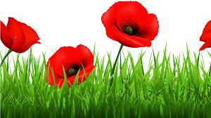 Poppies in grass.jpg