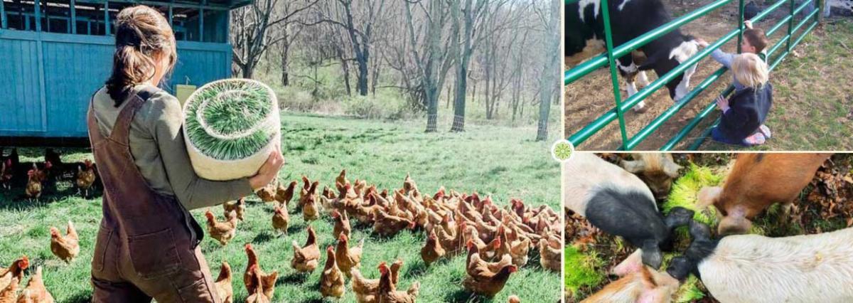 Farms in Bath County