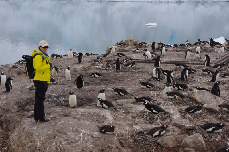 Heather Lynch with her penguins