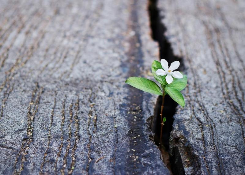 Grief Support image - small flower poking through hard surface
